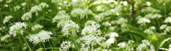 White flowers will make up the majority of the garden