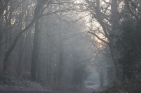 wrekin-forest_3